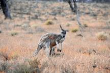 Australien_Blog_00110