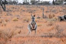 Australien_Blog_00111