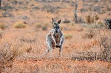 Australien_Blog_00112