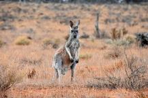 Australien_Blog_00113