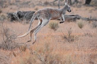 Australien_Blog_00114