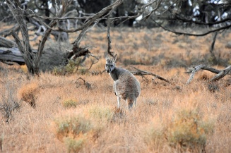 Australien_Blog_00115