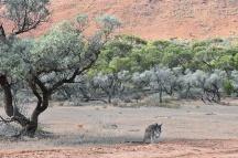 Australien_Blog_00124