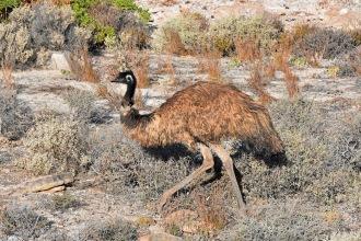 Australien_Blog_00169